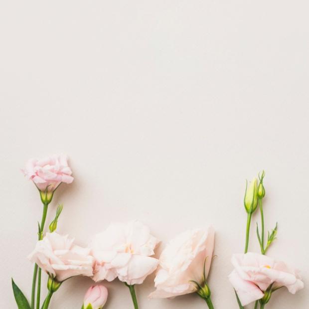 pink-roses-on-white_23-2147760497.jpg